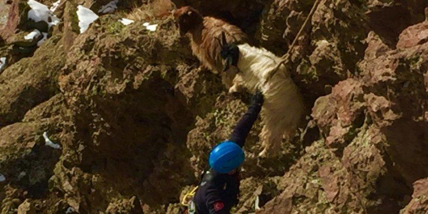 Van'da keçi kurtarma operasyonu