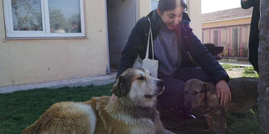 ODTÜ'lü öğrenciler sokak hayvanları için tasarlayacak