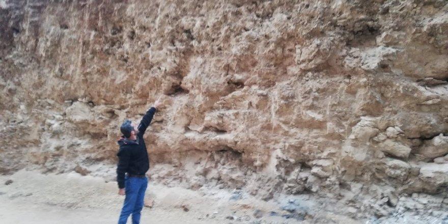 Mardin'de dinozor fosili bulunduğu iddiası