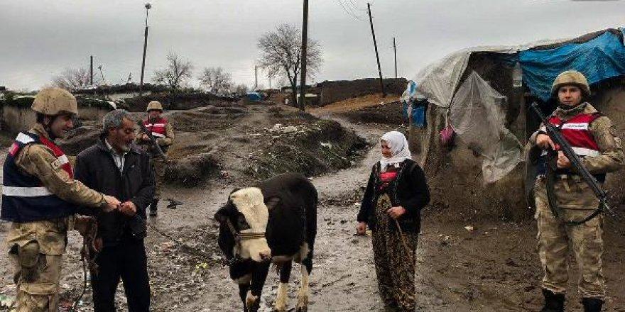 Diyarbakır'da 'inek' hırsızlığına 3 gözaltı