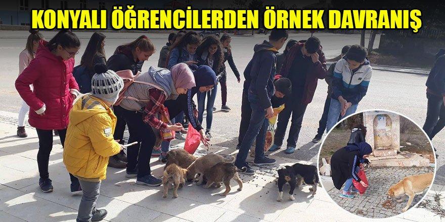 Öğrenciler harçlıklarıyla yem alıp sokak hayvanlarını besledi