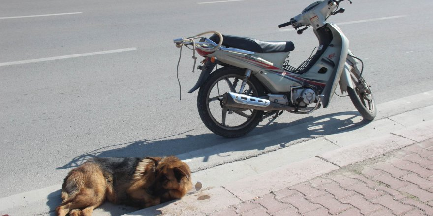 Konya'da motosiklete bağladıkları köpeği sürükleyen 2 şahıs ile ilgili görsel sonucu