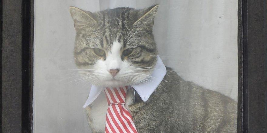 Assange'ın kedisi James de casuslukla suçlandı