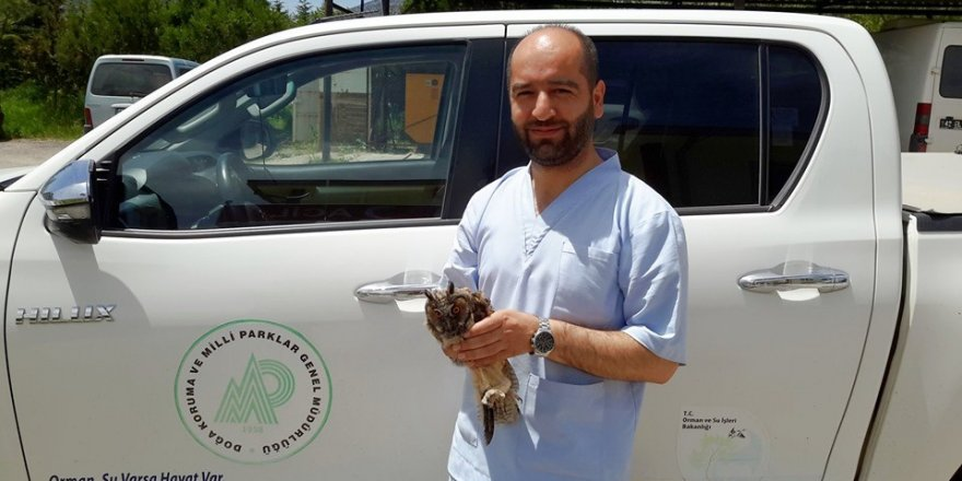 Hastane bahçesinde yaralı bulunan Puhu Kuşu koruma altına alındı