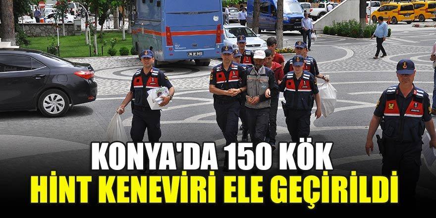 Konya'da  150 kök Hint keneviri ele geçirildi