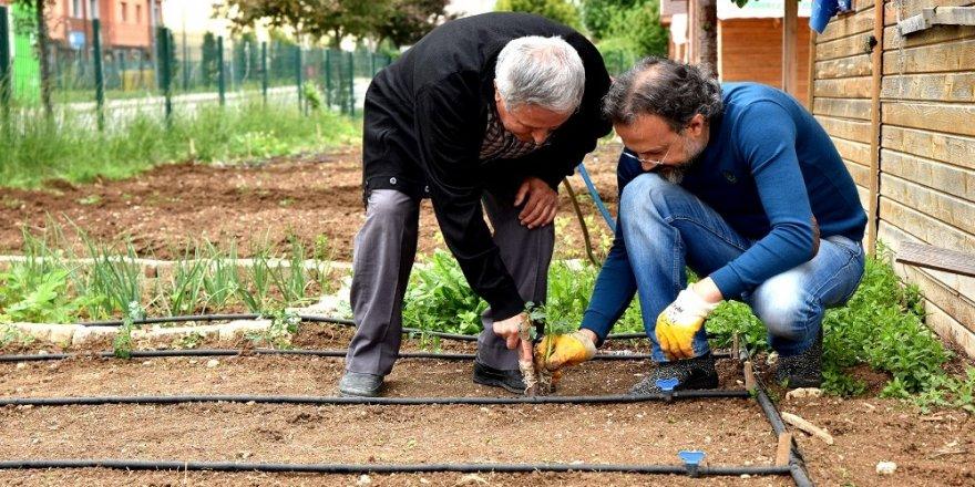 'Gönül Bahçeleri'nde üretimin hazzını yaşıyorlar