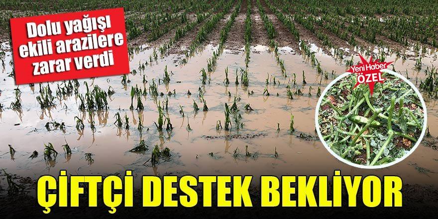Dolu yağışı ekili arazilere zarar verdi! Çiftçi destek bekliyor