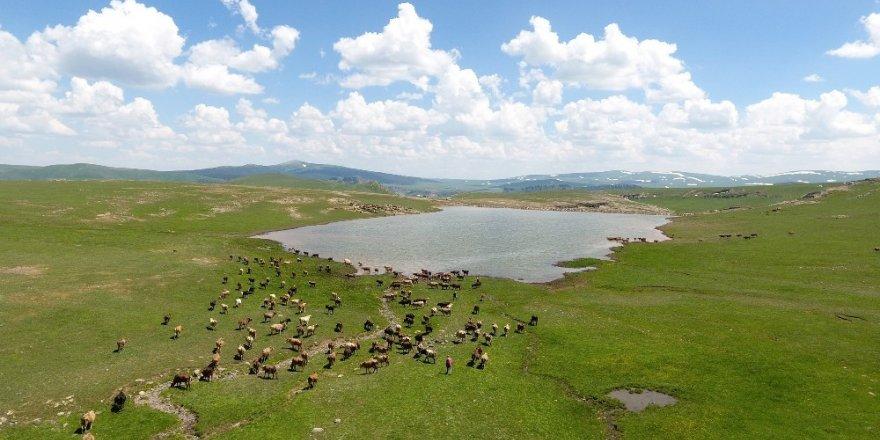 Erzurum Büyükşehir Belediyesi'nden gölet rekoru ile ilgili görsel sonucu