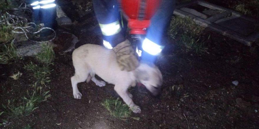 Su kuyusuna düşen köpeği itfaiye kurtardı