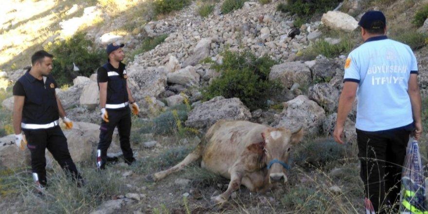 Mahsur kalan inek ve kedi, itfaiye ekipleri tarafından kurtarıldı