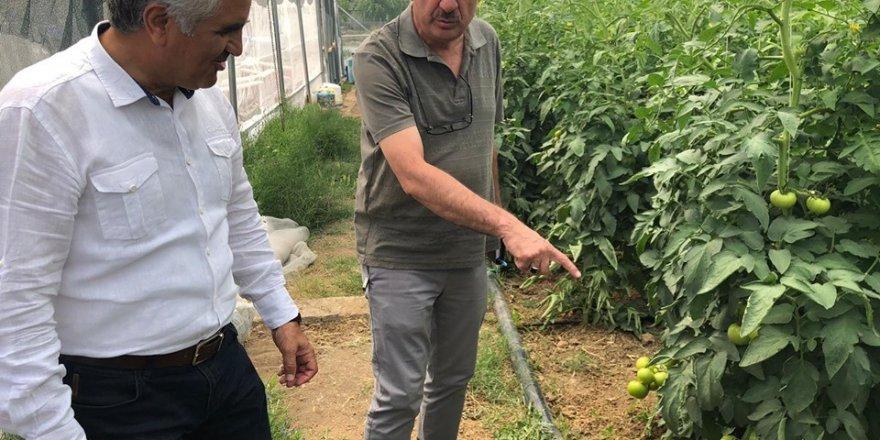 Erzincan Üzümlü'de kurulan seralar ürün vermeye başladı