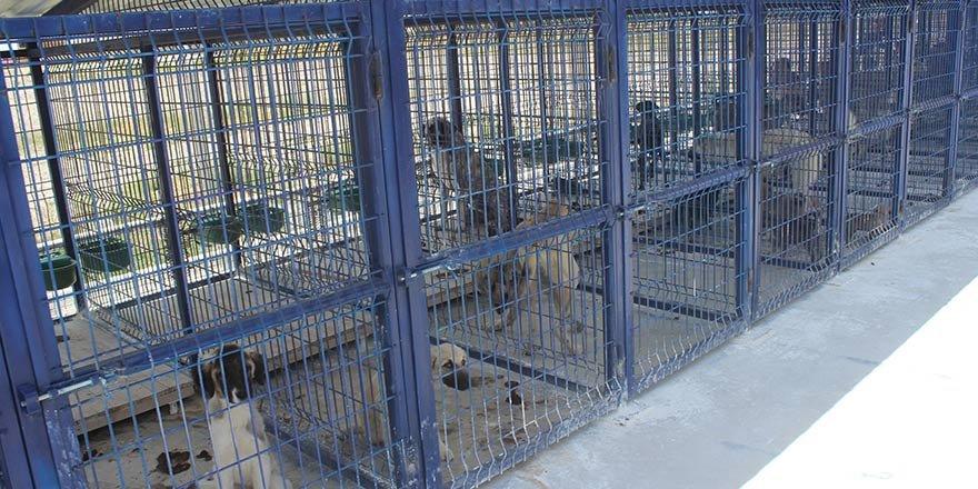 Karapınar'da hayvan barınağı sahipsiz hayvanlar için yuva oldu