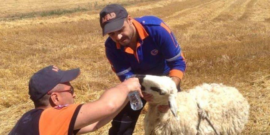 Konya'da kayıp  çocuk aranırken çukura düşen koyun kurtarıldı