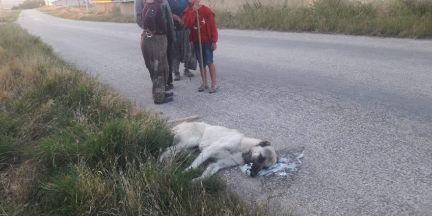 Sokak köpeklerini zehirleyerek öldürdüler