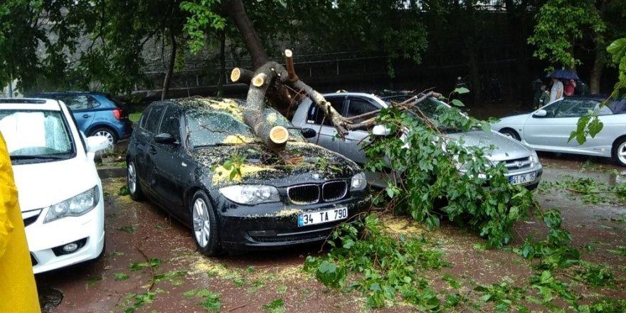 Şimşek düşen ağaç 4 otomobilin üstüne devrildi