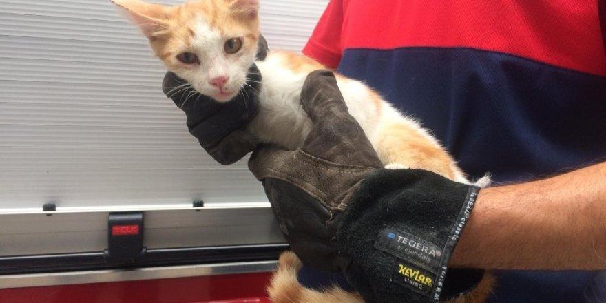Ağaçta mahsur kalan kediyi itfaiye eri tırmanarak kurtardı