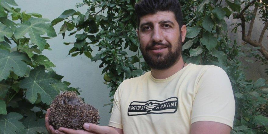 Köylüler kirpiyi kaçak avcıların elinden kurtardı