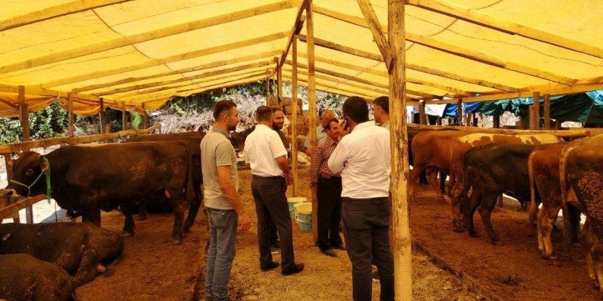 Kurban Bayramı için hayvan pazarında gerekli tedbirler alındı