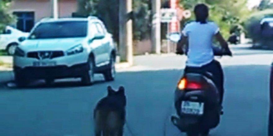Köpeğini motosiklete bağlayan kadına tepki
