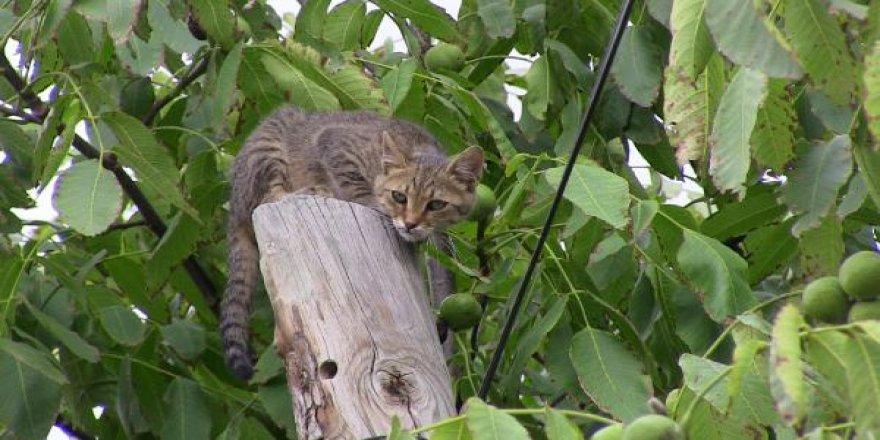 Telefon direğinde mahsur kalan kedi saatler sonra kurtarıldı