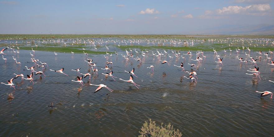 Rehabilite edilen gölet kuş sesleriyle şenleniyor