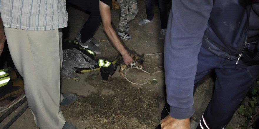 Kuyuya düşen yavru kediyi itfaiye kurtardı