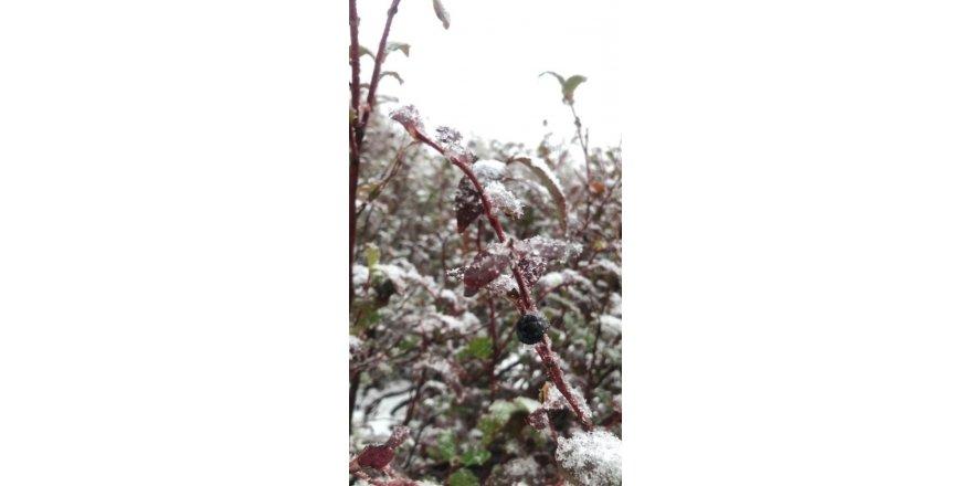 Macahel'e mevsimin ilk karı yağdı