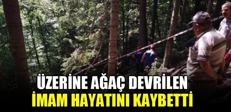 Üzerine ağaç devrilen imam hayatını kaybetti