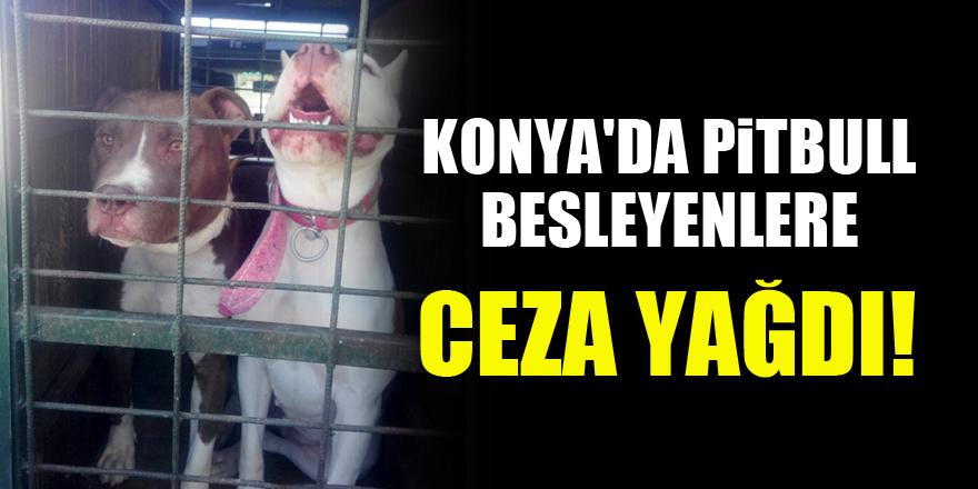 Konya'da pitbull besleyenlere ceza yağdı!