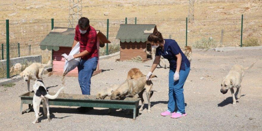 Mardin'de 'sokak hayvanları' rehabilitasyon çalışmaları devam ediyor