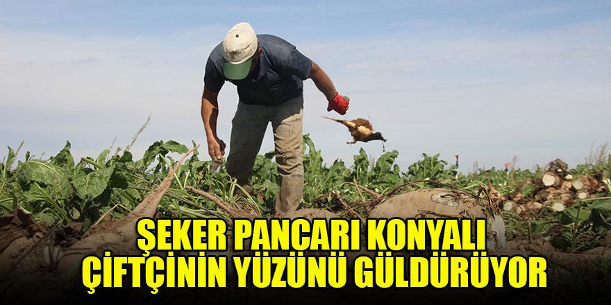 Şeker pancarı Konyalı çiftçinin yüzünü güldürüyor