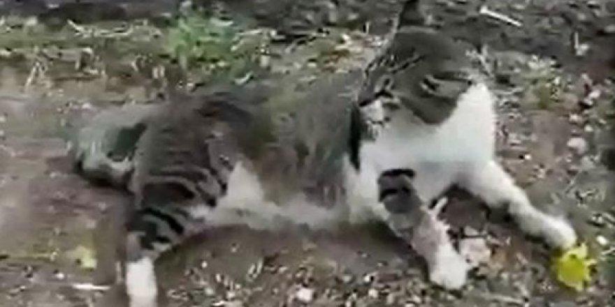 Komşusunun, kedisini tüfekle öldürdüğü iddiasıyla şikayetçi oldu