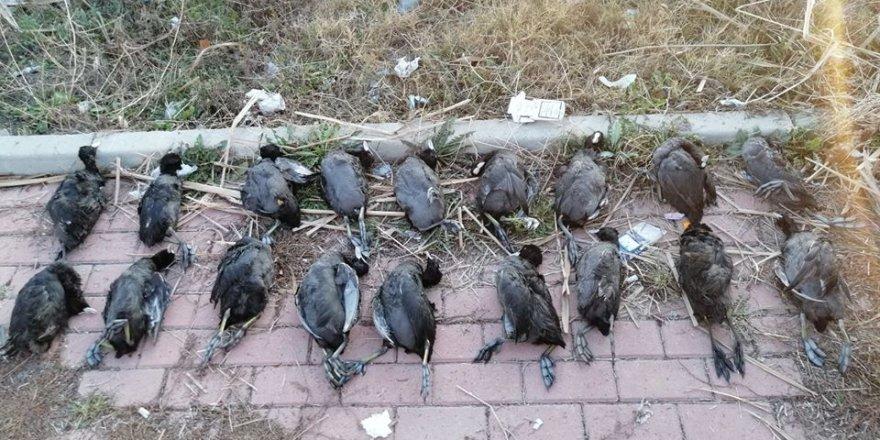 Konya'da sakar kuşu avcısına 13 bin 526 lira ceza kesildi
