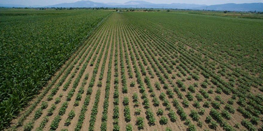 Tarımsal danışmanlık hizmetlerine destek