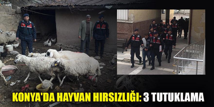 Konya'da hayvan hırsızlığı: 3 tutuklama