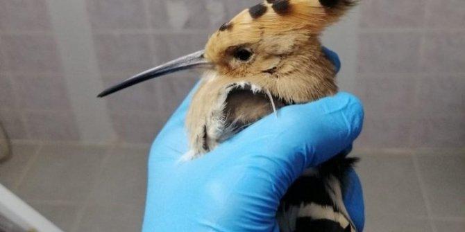 Yaralı yaban hayvanlarına bakım