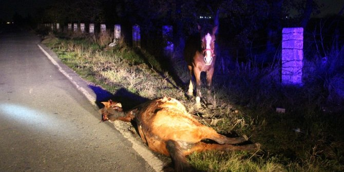 Ölen atın başından ayrılmadı