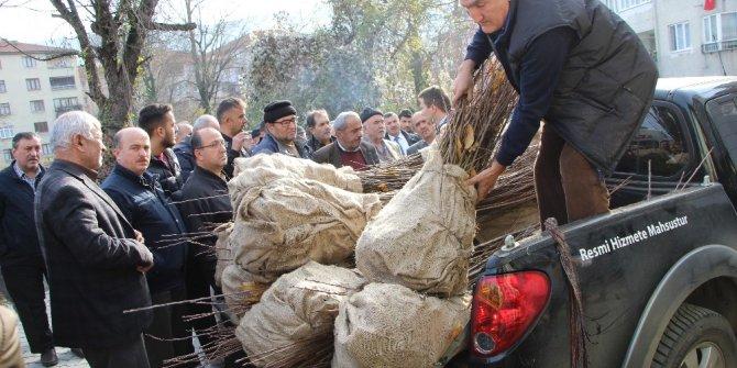 Devrek'te çiftçilere yönelik kestane fidanı dağıtımı gerçekleştirildi