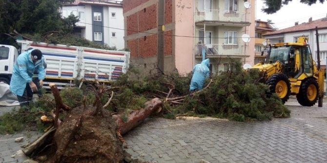 Denizli'de fırtına sonrası temizlik çalışmaları başladı