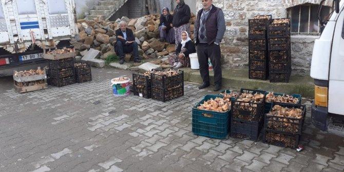 8 kişi dağa çıkıp 650 kilogram mantar topladılar