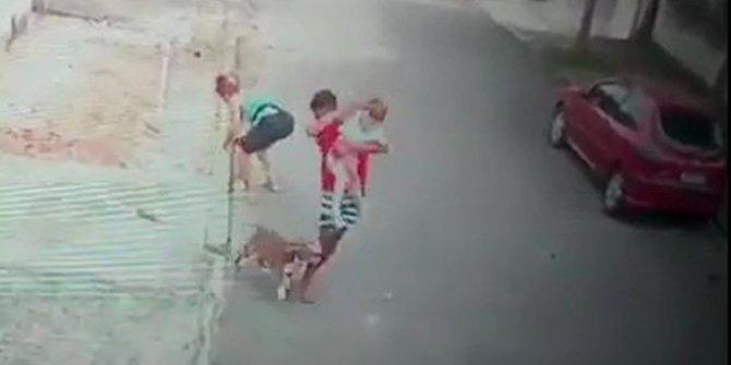 Küçük çocuğu pitbull saldırısından kurtaran genç kahraman ilan edildi