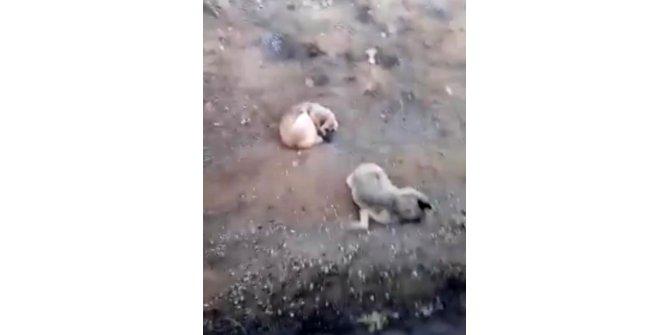 Elazığ'da bir köpek, ölen dişisinin başında 4 gün bekledi