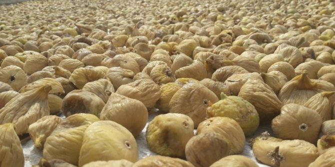 31 bin incir ihracatı 118 milyon dolar kazandırdı