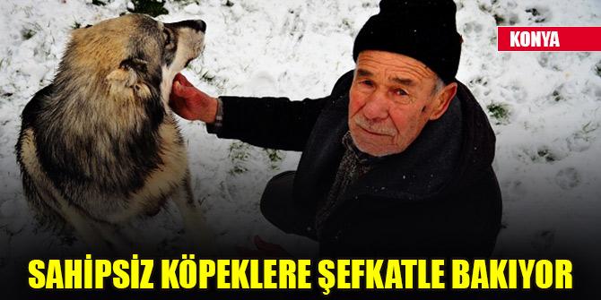 Konya'da 77 yaşındaki Eyüp Nizam sahipsiz köpeklere şefkatle bakıyor