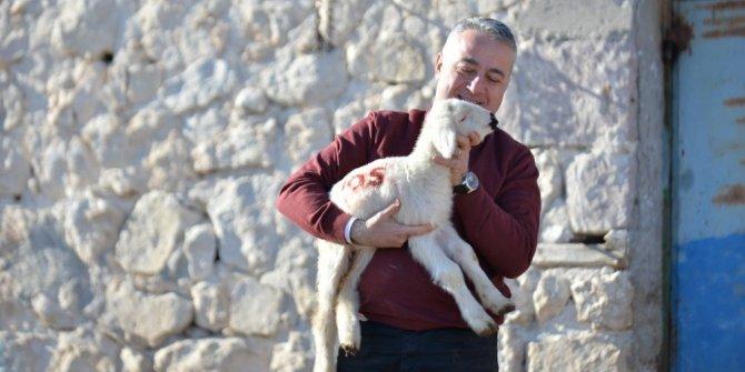 Hayvancılığa son 17 yılda 33 milyar lira destek