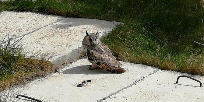 Karapınar'da bulunan yaralı baykuş tedavi ediliyor