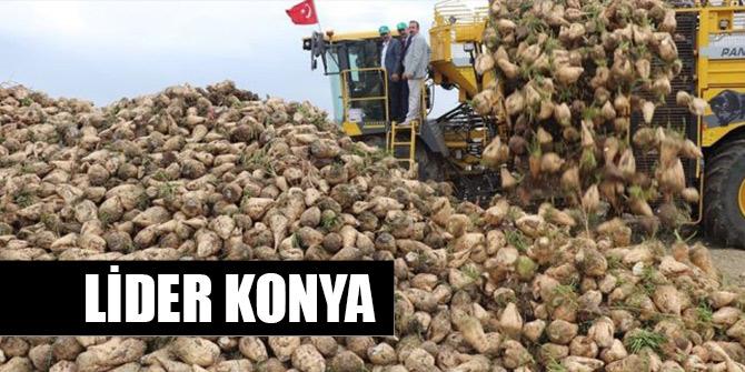 Şeker pancarı üretiminde lider Konya