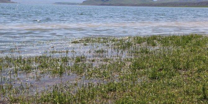 Yağış nedeniyle binlerce dönüm ekili arazi sular altında kaldı