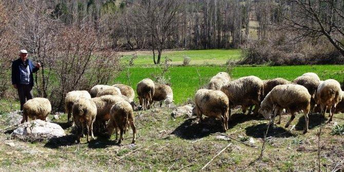 Kütahya'da küçükbaş hayvan sayısı 487 bin 954