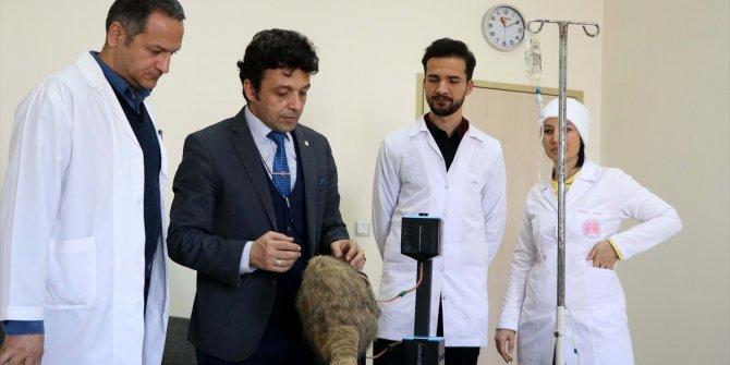 Veteriner hekim adaylarının el becerileri simülatör yardımıyla gelişecek